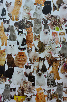 Cats & Kittens Gift Wrap 2 Sheets + 2 Matching Tags Wrapping Paper Pack NEW