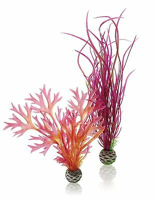 biOrb Easy Plant Medium Pack of 2 Red/ Pink Red / Pink
