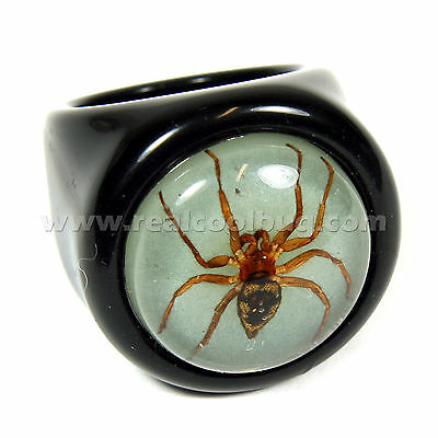 Real Spider on Glow in the Dark Background Ring Black Ring(R0018)