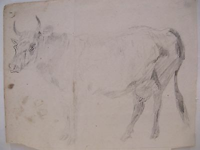 19th CENTURY, Pencil Drawing / Sketch, STUDY OF A STANDING COW