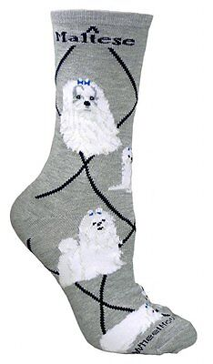 Maltese Dog Breed Gray Lightweight Stretch Cotton Adult Socks
