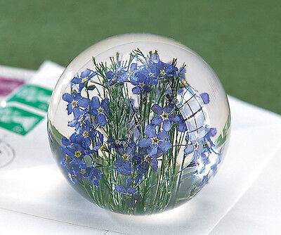 Forget-Me-Not Blue Flower Round Resin Paperweight