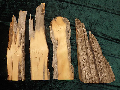 Huon pine sculptural small sections - Craft or sculptural.