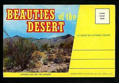 Postcard Folder  USA American Desert Cactus Cacti Flowers Chrome