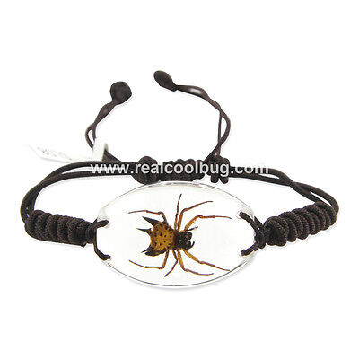 Real Spiny Spider(Gasteracantha hasselci) Bracelet Clear (SL08)