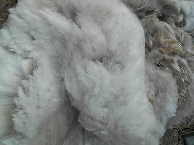 300g Fine Raw White Cream Alpaca Fleece Spinning Felting from Charlotte