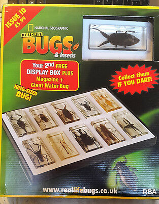 National Geographic Real-Life Bugs & Insects Magazine Issue 10 Giant Water Bug