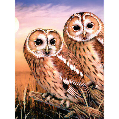 """Junior Small Paint By Number Kit 8.75""""X11.75"""" Tawny Owls PJS-87"""