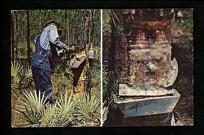Industry postcard Pine tree gum working