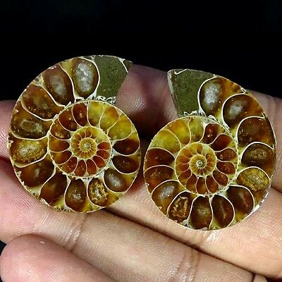 113.70Cts Natural Ammonite Gemstone Fancy Cabochon Nice Matched Pair For Earring