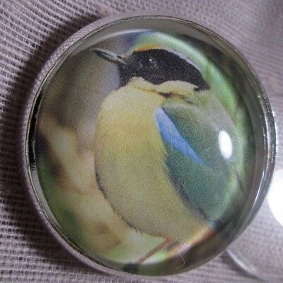 Glass Dome Button Of A Pretty Light Blue & Yellow Bird With Black Head