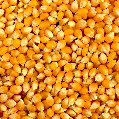 100% Natural Popcorn Pop Corn Seeds Raw Popping Kernels 500g - Free UK Delivery
