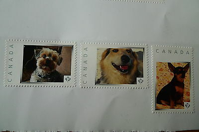 Canada Dogs 3 Beautiful Picture Postage Stamps Set Mnh Very Limited Printing