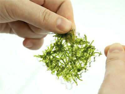 Square Aquatic Plants Moss Pad for Aquarium Fish Tank Moss Live Plants 5cm