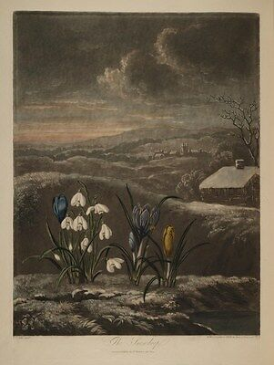 Reproduction Print on A4 - A. Pether -  Temple of Flora 1807 - The Snowdrop