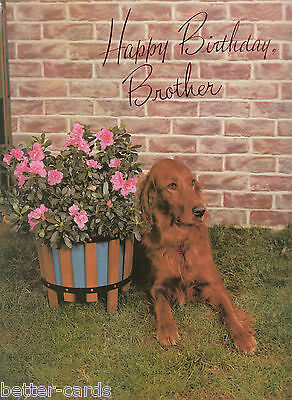 Vintage 1970's Happy Birthday Brother Large Greeting Card ~ Irish Red Setter Dog