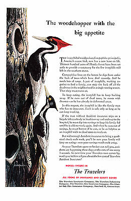 1951 Woodpecker Ivory Billed Woodchopper Travelers Insurance Original MagazineAd