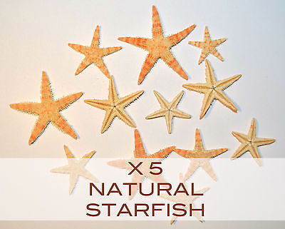 NATURAL STARFISH X 5 (2 - 4cm) ●CRAFTS●DECORATIONS●CANDLE MAKING●WEDDING●