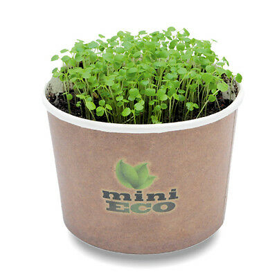 3000 Watercress Seeds Grow Kit Herb Microgreens Organic Sprouting Cress Gift Bio