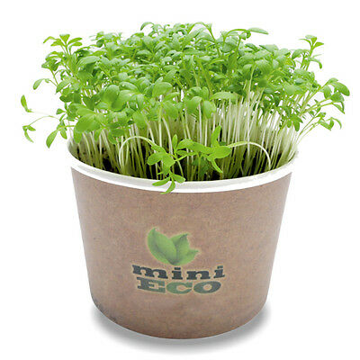 2000 Garden Cress Bio Seeds Microgreens Grow Kit Herb Sprout Hydroponic Starter