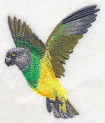 Senegal Flying Parrot  Embroidery Patch