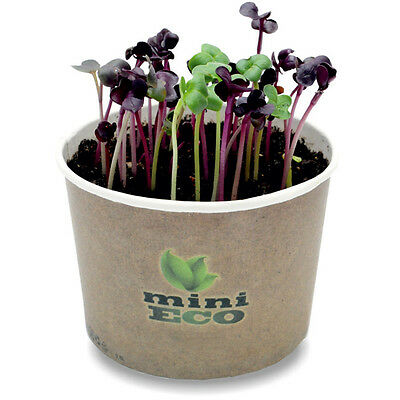 400 Radish Seeds Red Rambo Micro Greens Grow Kit Vegetable Home Organic Sprouter