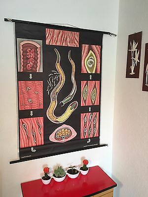 Vintage Pull-Down School Chart Jung Koch Quentell Trichina Worm Parasite Antique