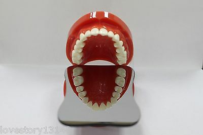 Dental Intraoral Orthodontic Photographic Glass Mirror 2sided Rhodium Occlusal E