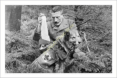 ad002 British Army search rescue Red Cross Border Collie dog WW1 WW1 WWI photo