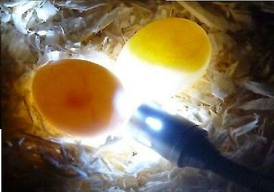 Flexible Fertile Egg Candler Cage Canary Budgie Finch Bengalese Goldfinch Snake