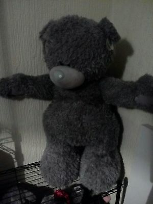 standing me to you tatty teddy