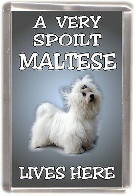 "Maltese Terrier Dog Fridge Magnet ""A VERY SPOILT MALTESE LIVES HERE"""