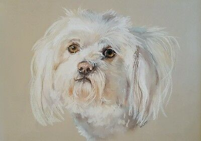 Original One of a Kind Pastels Pencils Painting of Maltese Dog Framed