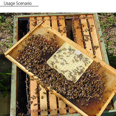 Queen Rearing Cupkit Box Queen Bee Rearing Cell System Cupularve Beekeeping Tool