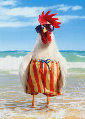 Rooster Wears Swimsuit Funny Fathers Day Card - Greeting Card by Avanti Press
