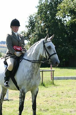 Jeffries Black Show Hunter Double Bridle Excel Condition Full/Cob Traditional