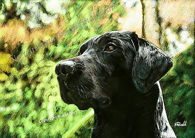 Black Labrador Dog A4 Sized Art print of original Drawing by Stephen Russell