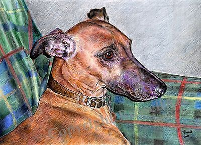 Sandy Whippet Greyhound Dog A4 Sized Art print of original Drawing by S Russell