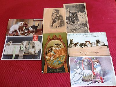 Lot of (7) ANTIQUE Victorian CAT kitten EUROPEAN POSTCARDS Helena Maguire OLD