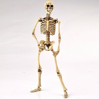 """1/6 Scale COOMODEL Toys COO Skeleton Body 2.0 Movable hobbies 12"""" Action Figure"""