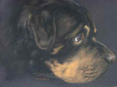 Rottweiler Dog Original Art Pastel Drawing by Artist Mel Shepherd