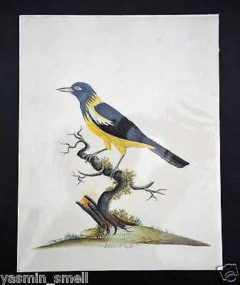 Hand Coloured genuine antique picture painting print bird Osterley Park 1794
