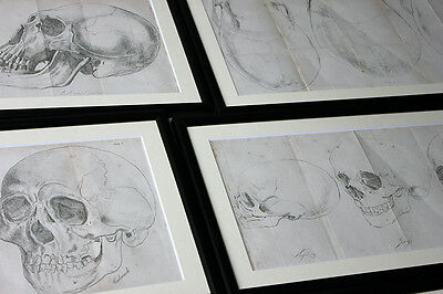 Antique Group of 7x Engravings of Skulls;Natural History of Man; Prichard c.1848