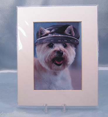 Cairn Terrier Animals in Hats Matted Photograph by Carol Gault