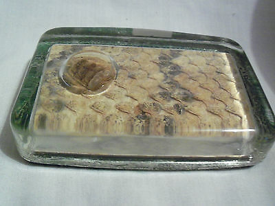 REAL  RATTLESNAKE SKIN and RATTLE PAPER WEIGHT