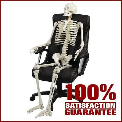 Life Size Human Skeleton Model Anatomical Anatomy Medical Stand Joint Full Size