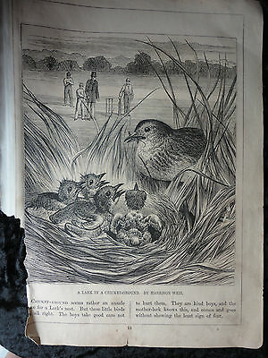 Harrison Weir bookplate engraving 1878 - Lark with F.W.Keyl engraving on reverse