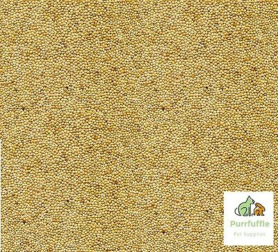 20kg WHITE MILLET Bird Seed Food Budgie Canary Finch Aviary Parrot Parakeet Feed