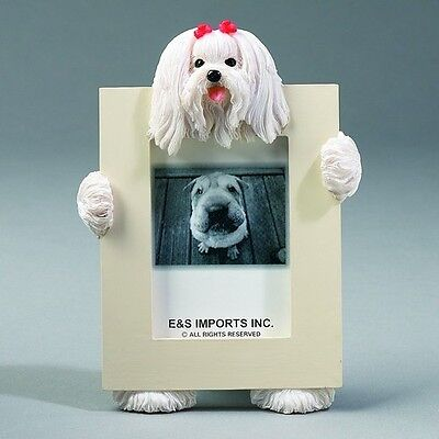 Maltese Dog Picture Photo Frame