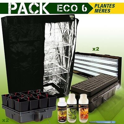 Pack Box Plantes Meres - Boutures Eco 6